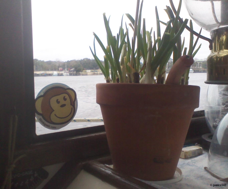 Flowers Healthy & Flower Pot Heater Debunked - Flowers Healthy