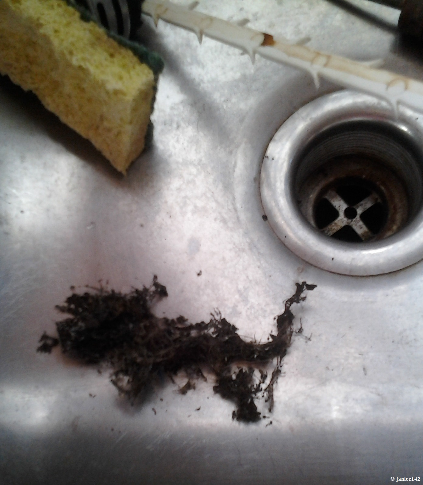 Drain Cleaner Article On Janice142
